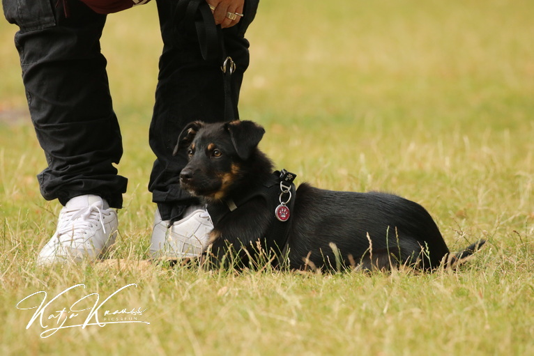 Hundeschule-GREH-3Welp_0E6A0184