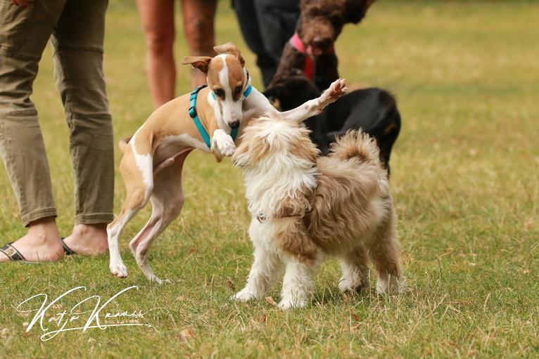 Hundeschule-GREH-3Welp_0E6A0188