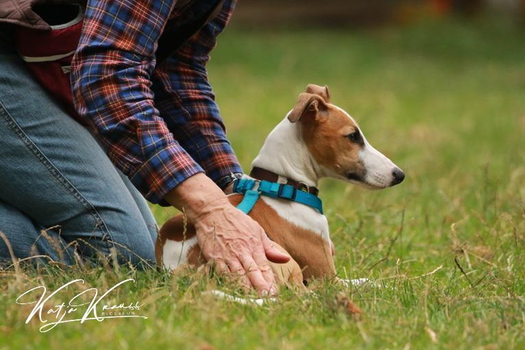 Hundekongress- jetzt anmelden und kostenlos dabei sein! - Hundeschule GREH