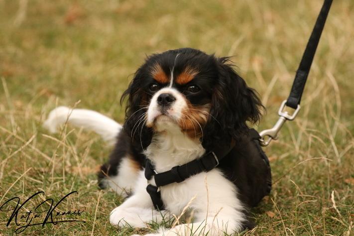 Hundeschule-GREH-4WelpM_0E6A4843
