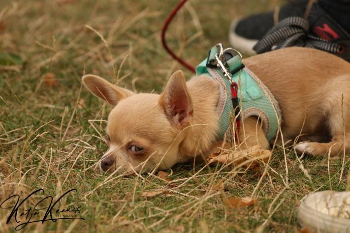 Hundeschule-GREH-4WelpM_0E6A4846