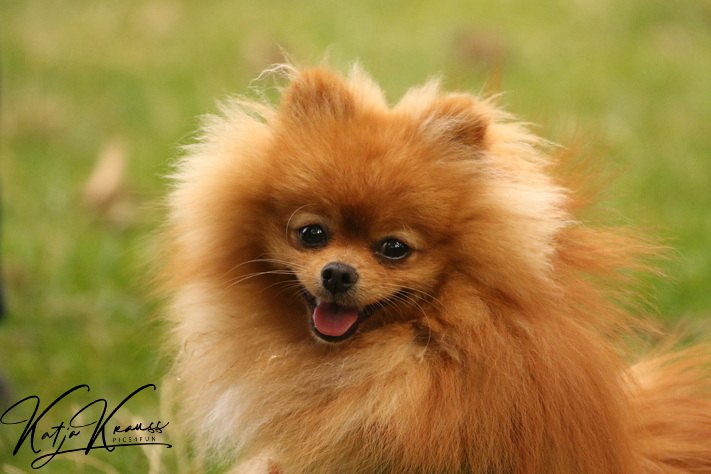 Hundeschule-GREH-4WelpM_0E6A5365