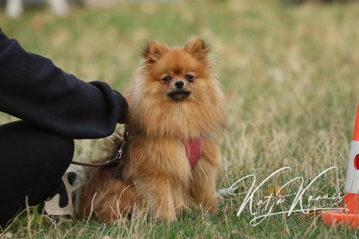Hundeschule-GREH-6JungM_0E6A5464