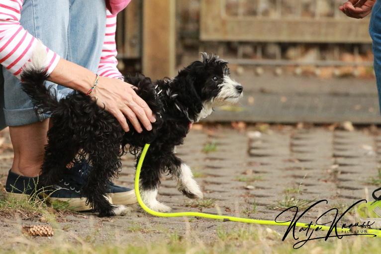 Hundeschule-GREH-8Tell_0E6A0861