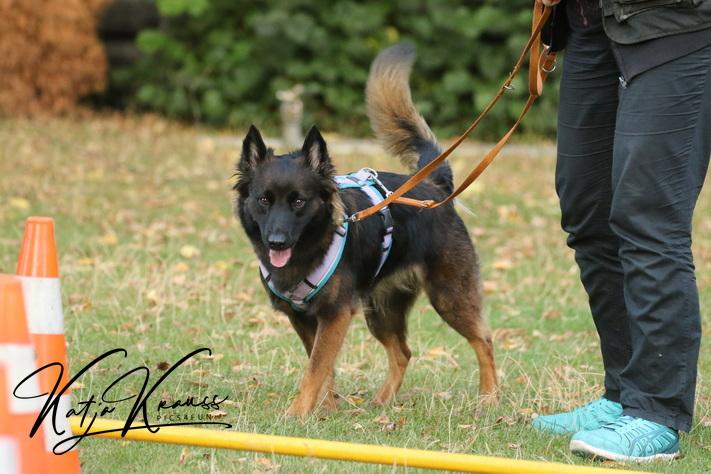 Hundeschule-GREH-8Tell_0E6A5573