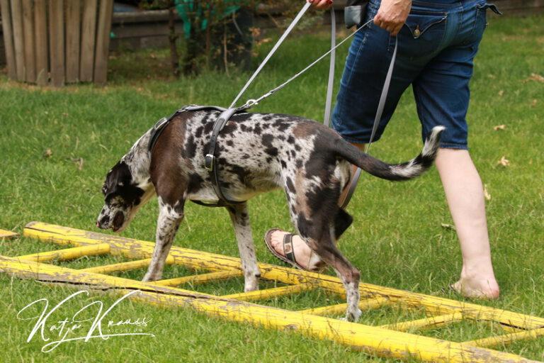 Hundeschule-GREH-8Tell_0E6A5740