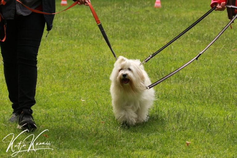 Hundeschule-GREH-8Tell_0E6A6447
