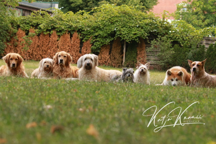 Hundeschule-GREH-9Hundf_0E6A0135