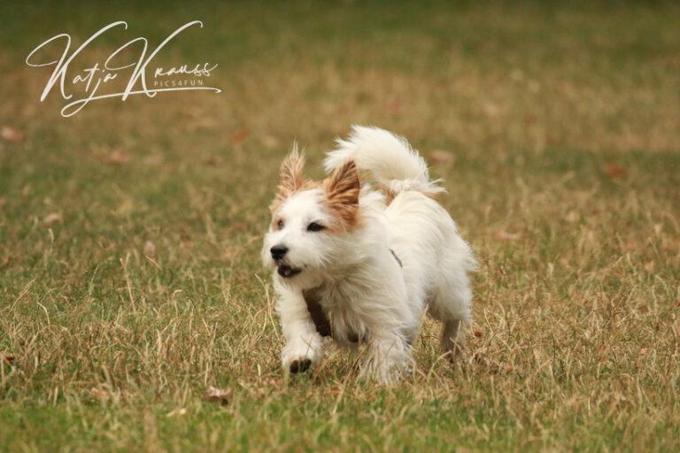 Hundeschule-GREH-9Hundf_0E6A1086