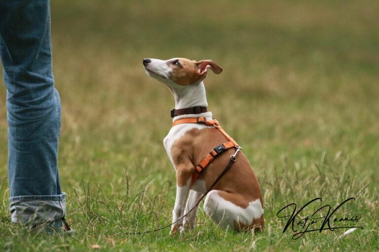 Hundeschule-GREH-9Hundf_0E6A8974