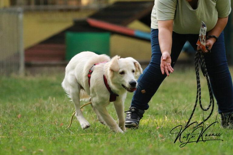 Hundeschule-GREH-9Hundf_0E6A9359